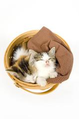 kittens sleeping in a basket