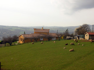 Countryside Houses