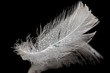 feather with drops