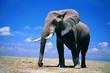 roleta: elephant