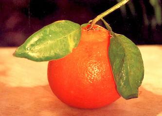 clemantine citrus fruit