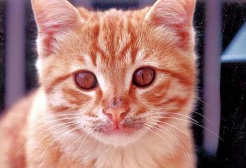 genny cat