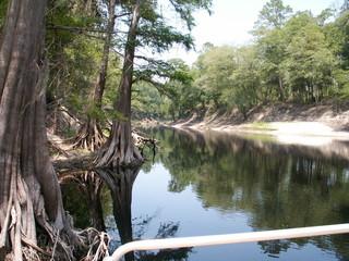 suwannee river in june