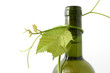 wine bottle and young grape vine branch