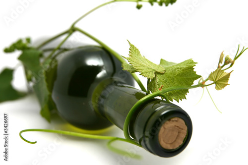 wine bottle and young grape vine branch in early