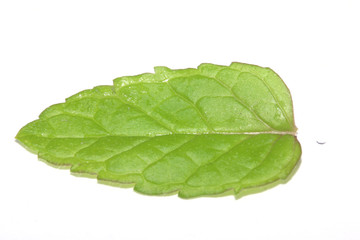 Photo of the isolated single mint leaf