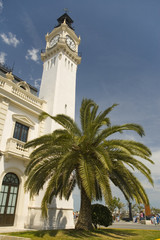 clock tower and palm