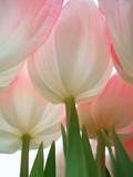 pink flowers - 3456617