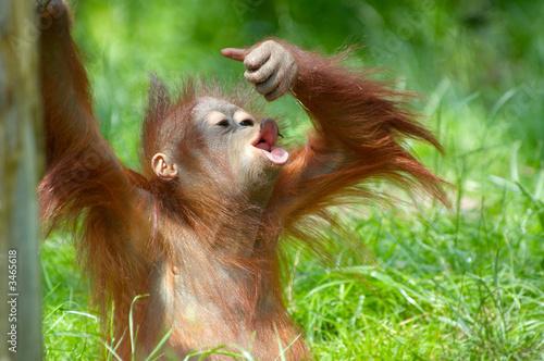 Leinwanddruck Bild cute baby orangutan