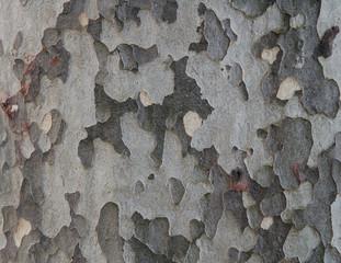 corteccia d'albero