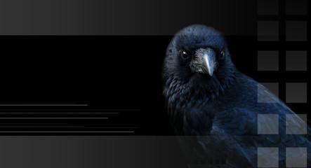 Crow, raven