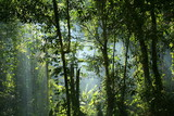 Fototapety jungle