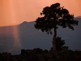 albero al tramonto poster