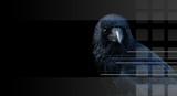 Crow, raven on black backround poster