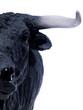 spanish bull 02