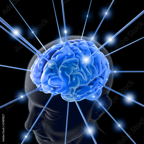 the brain - 3489827