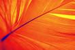 Leinwandbild Motiv phoenix feather