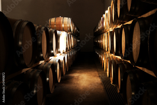 french oak barrels in the wine cellar in franschho