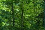 backyard trees at dusk poster