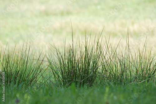 green fresh grass (with telephoto lens)