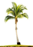 palm tree isolated - Fine Art prints