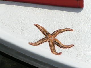 dry star on boat