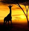 Leinwanddruck Bild african spirit