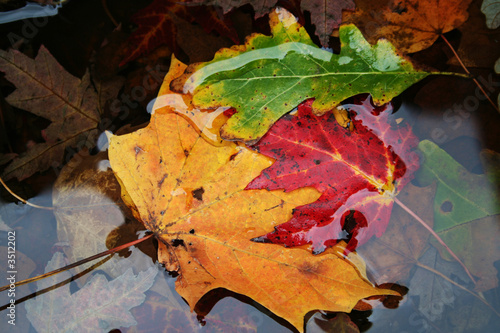 colorful leaves in the water