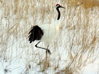 crane (illustration)