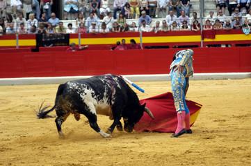 torero-53