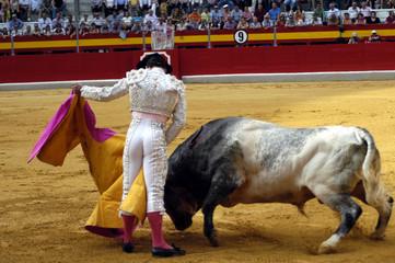 torero-63