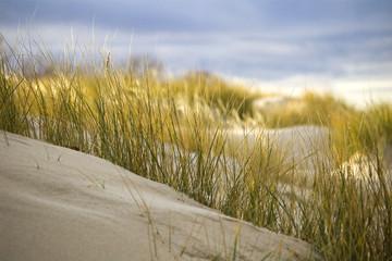 dune#2