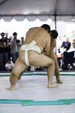 Zápasníci sumo