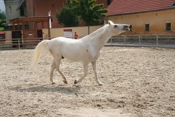 verspieltes pferd