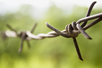 A barbed wire closeup
