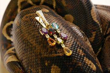Brown snake with modern jewelrys 5