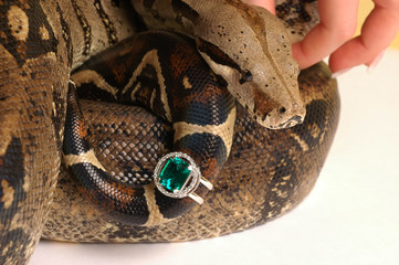 Brown snake with modern jewelrys 6