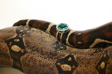 Brown snake with modern jewelrys 8