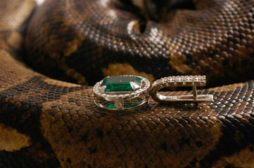 Brown snake with modern jewelrys 10