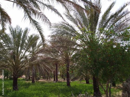 Fotobehang Tunesië Palmeraie