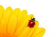 Leinwandbild Motiv Ladybird