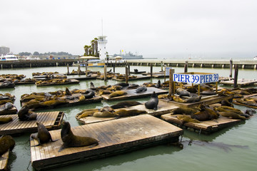 Pier 39 at San Francisco Bay Area