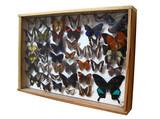collection de papillons poster