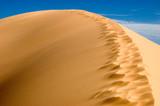 USA. Utah. Kanab. Coral Pink Sand Dunes State Park. poster