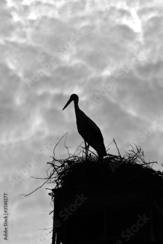 Silhouette of a stork against cloudy sky
