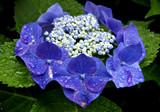 Fototapeta kwitnąć - kwiatów - Kwiat