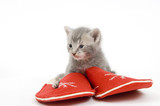 slippers and kitten poster