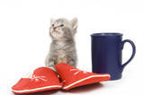 Kitten, coffee cup and slippers poster