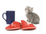 A gray kitten sits next to a pair of slippers and a coffee cut poster