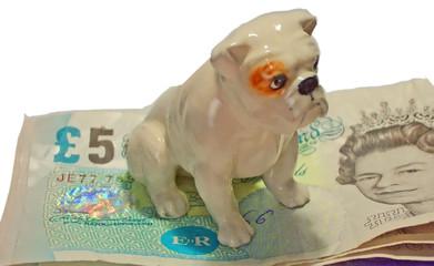 Bulldog guarding money